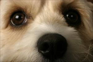 puppy-nose